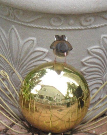 juncoandgazingball2.jpg