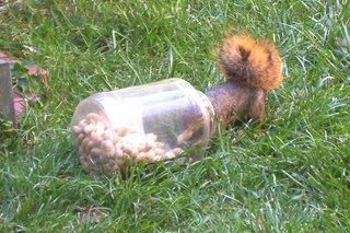 squirreljarsmall.jpg