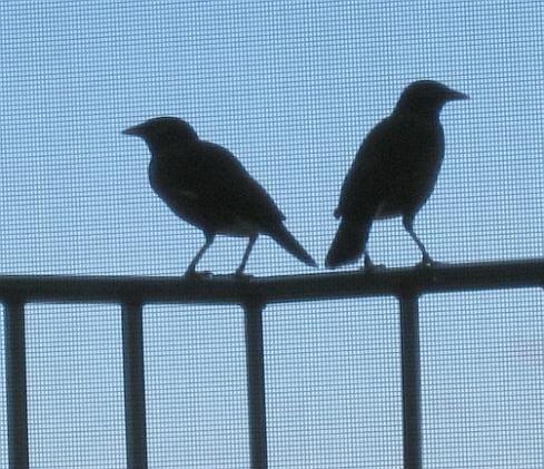 bird-silhouettes-resize.jpg