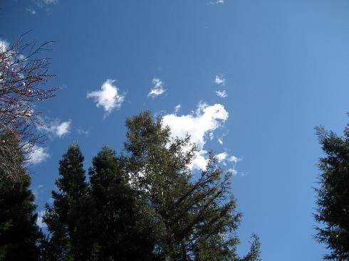 lamb-cloud-small-resize1.jpg