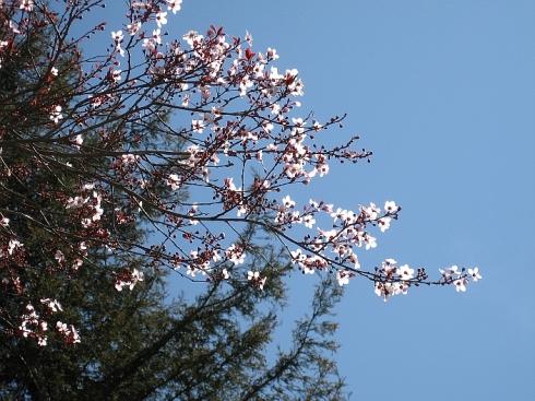 treeinbloom-resize2.jpg