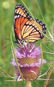 butterfly_01.jpg