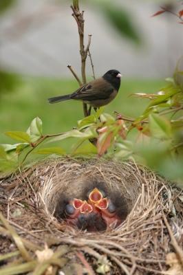 Nesting Materials For Birds Chickadees Juncos And Jays