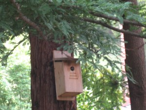 nestbox-chickadee-inside
