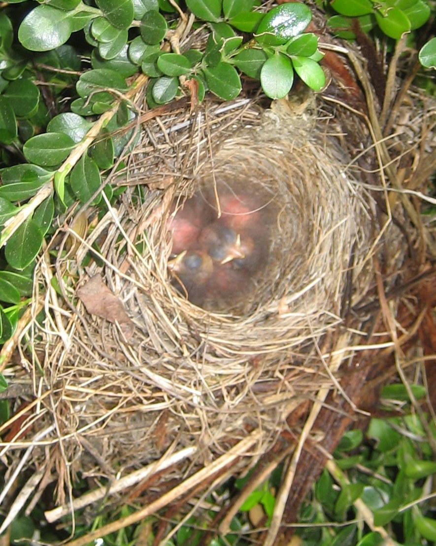 chickadees juncos and jays oh my backyard bird watching in